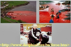 Illustration du massacre des dauphins aux îles féroé